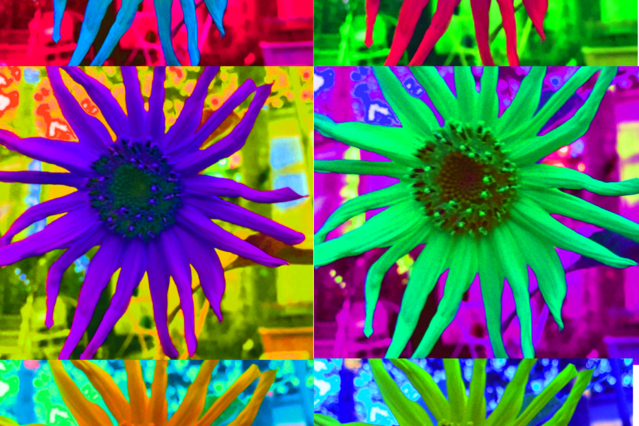Mutli-colored sunflowers in six panel layout