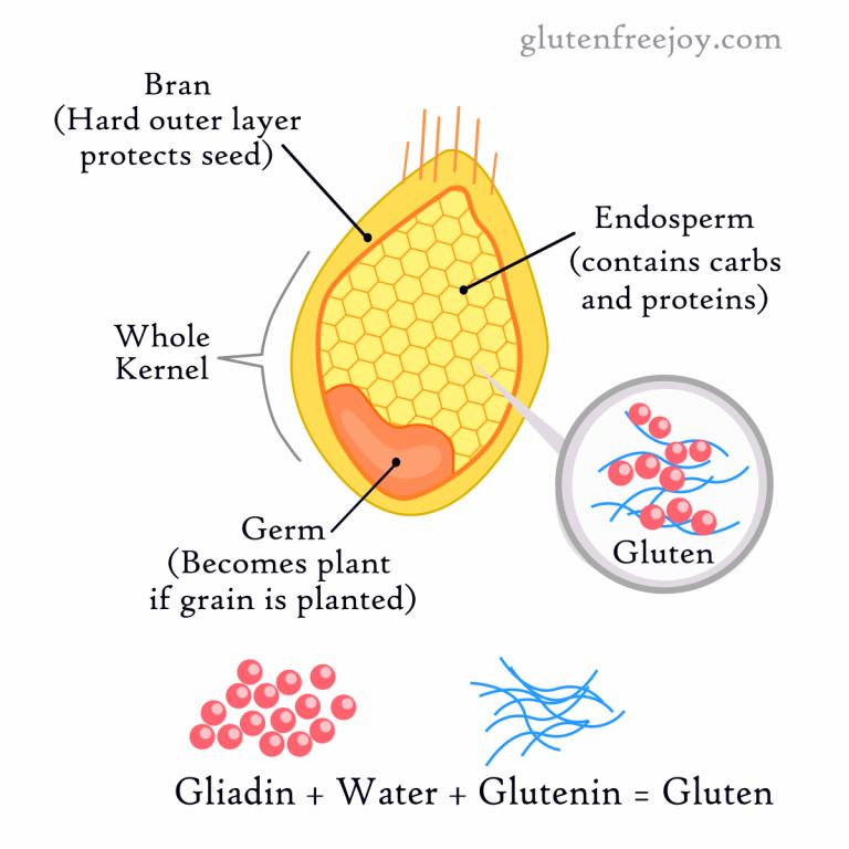 grain_gluten